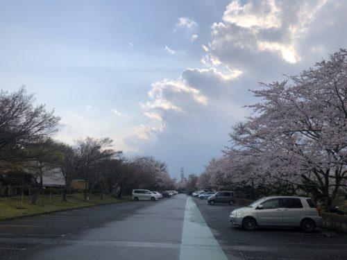 時之栖 桜並木
