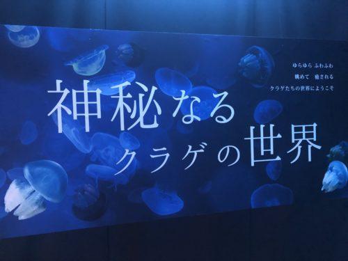 クラゲの世界