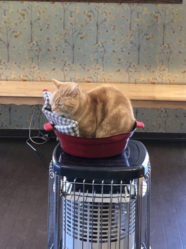 ネコの館 ストーブの上にネコ