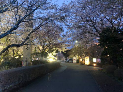 時之栖の桜